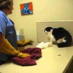 Εξαγριωμένη γάτα