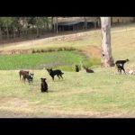 Οι σκύλοι στέκονται ακίνητοι
