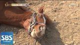 Мързелив кон