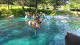 Magical scenery – Bucks in the water