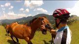 Gens de chevaux vs