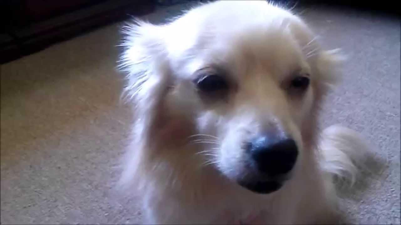 Если собака съела коноплю сколько марихуаны
