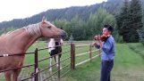 Kôň nadšene počúva husle