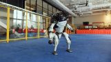 "I robot Boston Dynamics stanno ballando ""Mi ami"""