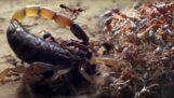 הנמלים הרוצחות