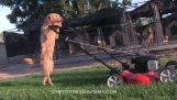 Ο σκύλος κάνει τις δουλειές του σπιτιού