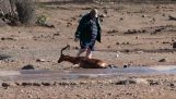 Muž šetrí antilopu