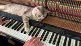 "The ""River Flows In You"" on piano along with a cat"