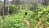 Hikers encounter a grizzly bear