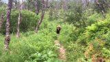 पैदल यात्रियों के एक ग्रिजली भालू का सामना