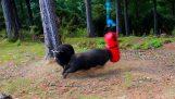 Τι γίνεται αν αφήσεις ένα σάκο του μποξ στο δάσος;