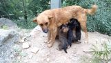 Mom rediscovers her puppies