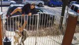 Собака убегает от своего владельца и атакующего человек пробежки