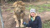 Λιοντάρι τρομάζει μια δημοσιογράφο