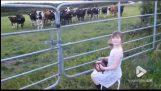فتاة صغيرة يغني قطيع من الأبقار