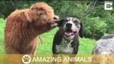 Nuttede ko mener han ' s A hund og bor i hus