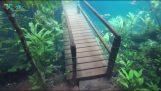 senderismo bajo el agua