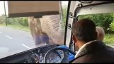 An elephant asks toll from a bus