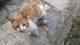 Μια αδέσποτη γάτα ζητά βοήθεια