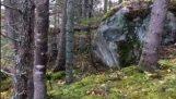 Ліс створює враження, що вдихає (Квебек)