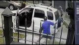 Psy chronić ich szefa przed złodziejami