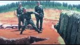 Accidents and blunders in the army