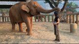 Ένας ελέφαντας κοιμάται αφού ακούσει ένα νανούρισμα