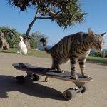 Η γάτα που κάνει skateboard