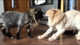 A experiência fracassada com corte de cabelo do gato