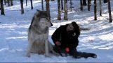 Παιχνίδι με τους λύκους