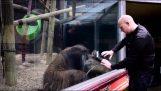 Orangutan prøver å imitere en magiker