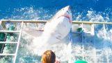 Μεγάλος λευκός καρχαρίας εισβάλλει στο κλουβί ενός δύτη