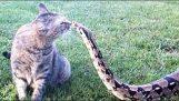Ατρόμητες γάτες