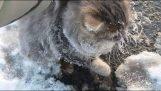 Βοήθεια σε μια γάτα που κόλλησε στον πάγο