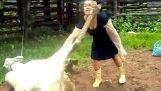 Όταν τα ζώα αντεπιτίθενται