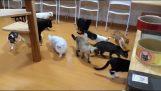 Περίεργες γάτες εναντίον ρομπότ καθαριστή