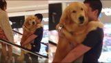 Ο σκύλος που φοβάται τις κυλιόμενες σκάλες
