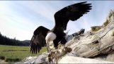 鹰抢断GoPro的相机
