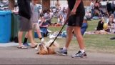 Ο σκύλος αρνείται να φύγει από το πάρκο