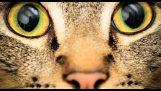 Sehen wie unsere Tiere betrachten