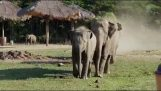Elephants welcoming their friend