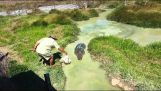 Crocodile hiding in shallow water
