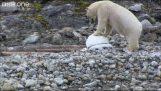 Κατασκοπευτικές κάμερες εναντίον πολικών αρκούδων