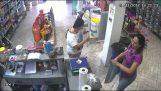 Ένας μικρός κλέφτης στο pet shop