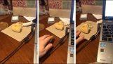Πονηρή γάτα προσπαθεί να κλέψει το ψωμί από το τραπέζι