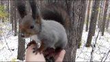 Hvordan laver venner i skoven
