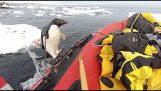 Ο πιγκουίνος πέρασε να πει ένα γεια