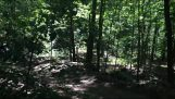 Testovanie robota v lese