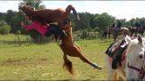 Το άλογο παλαιστής