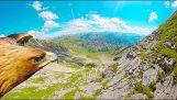 Μαζί με έναν αετό πάνω από τις Άλπεις
